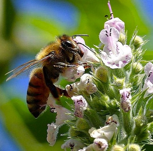 Pollinating_bees